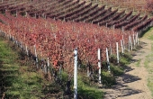 BRL008, A Barolo vineyard for sale in Langhe area